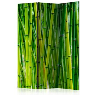 Paraván Bamboo Forest Dekorhome 135x172 cm (3-dílný)