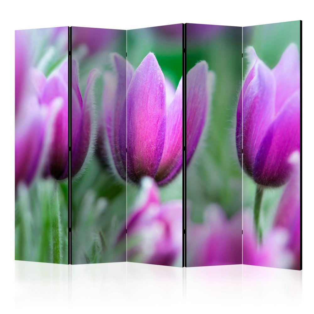 Paraván Purple spring tulips Dekorhome 225x172 cm (5-dílný)