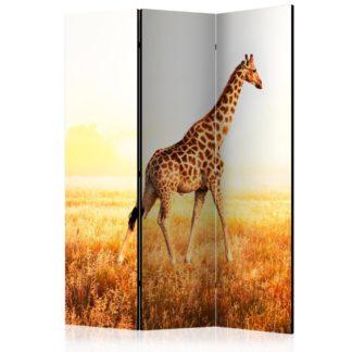 Paraván giraffe - walk Dekorhome 135x172 cm (3-dílný)